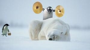 Pingvin algoritmus