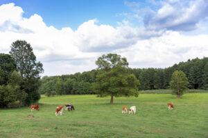 vidéki szállás